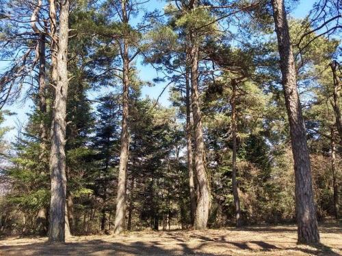 šume 2